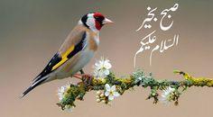 Subha Bakhair Pictures In Urdu Beautiful Morning Messages, Good Morning Beautiful Images, Good Morning Messages, Beautiful Birds, Morning Wishes Quotes, Good Morning Quotes, Dua For Success, Good Morning Msg, Dua In Urdu