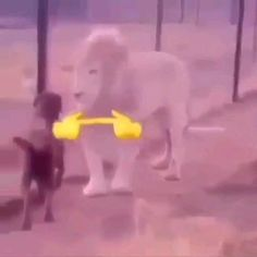 Funny Animal Memes, Funny Animal Videos, Cute Funny Animals, Funny Cute, Really Funny Memes, Stupid Funny Memes, Otaku Meme, Funny Short Videos, Wholesome Memes