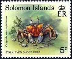 Stalk-eyed Ghost Crab (Ocypode ceratophthalma)