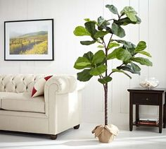 When all else fails... fake plants do the trick! Love this fiddle leaf fig from Pottery Barn! (affiliate)