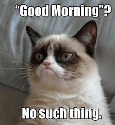 grumpy cat   Grumpy Cat, Real Name 'Tardar Sauce,' Taking The World – And ...