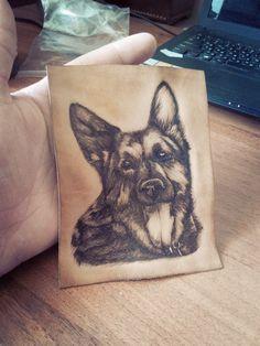 Немецкая овчарка (dog)