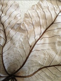detail of dried leaves shared by @Tami Ramsay