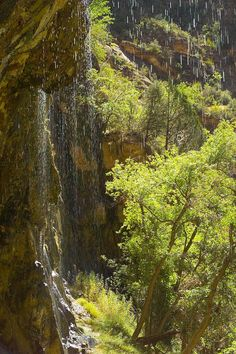 Zion National Park - Weeping Rock © Voyages Gendron