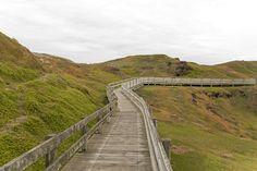 Boardwalk   Phillip Island, Australia