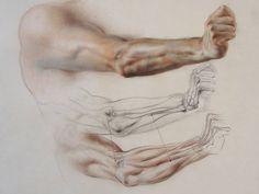 Realistic Drawing Tips Photo - Human Drawing Reference, Human Anatomy Drawing, Human Figure Drawing, Anatomy Reference, Life Drawing, Art Reference, Arm Anatomy, Anatomy Poses, Body Anatomy