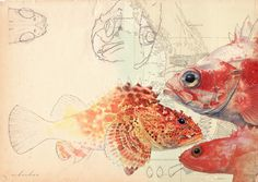 """Source: A. """"From coast to canvas: The art of biological illustration"""" Beautiful Photos Of Nature, Beautiful Fish, Art And Illustration, Biology Art, Model Sketch, Science Art, Animal Paintings, Fine Art Photography, Art Drawings"""
