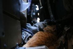 東京猫色    : 街の底で