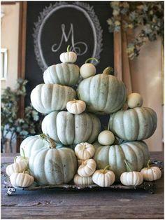 Autumn Splendor....savvycityfarmer: I SAY Pumpkins!!