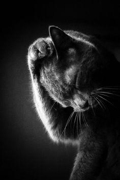 ❤️MonChatDoré – Beautiful Cats⎪Les plus beaux chats - Katzen Baby Kittens, Kittens Cutest, Cats And Kittens, Beautiful Cats, Animals Beautiful, Cute Animals, Pretty Cats, Baby Black Cat, Black And White Kittens