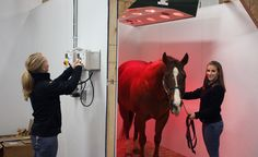 Morrisville State College's Equine Rehabilitation Center delivers cutting-edge rehab for horses in New York State and the northeastern United States