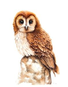 ARTFINDER:  OWL,  bird, birds, animals, wildlife... by Karolina Kijak - Original watercolors of Owl Paper 300g,  100% cotton size 32x44cm  Follow me on facebook: https://www.facebook.com/kijakwatercolors
