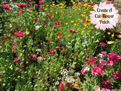 Create a Cut-Flower Patch