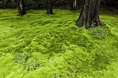 Here's What to Know If You Want to Create a Low-Maintenance Moss Lawn