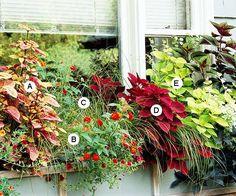 Go Bold with Foliage
