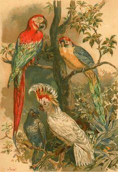Parrots, Brehm's Life of Animals, 1883, Antique chromolithograph.