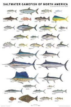 fishing gifts christmas fishing gifts fishing presents gifts saltwater fish Jet Ski Fishing, Sport Fishing, Gone Fishing, Fishing Knots, Fishing Tips, Fishing Lures, Fishing Reels, Fishing Tackle, Salt Water Fish