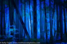 How to Create Surreal Forest Photos in Minutes - North Woods Photos Lightroom, Photoshop, Blue Forest, Abstract Nature, Photo On Wood, Photography Tutorials, Impressionist, Surrealism, Northern Lights