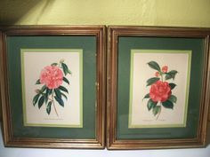 Vintage Pictures Camellia Flowers set of 2 shabby by rustyitems, $20.00