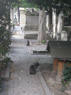 Montparnasse Cemetery..  Cats in the cemetery
