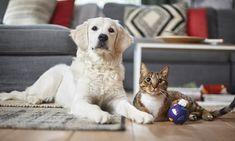 Prepara cappuccino ca un barista: retete si trucuri utile Barista, Cats, Animals, Gatos, Animales, Animaux, Kitty, Cat, Cats And Kittens