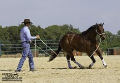 Exercise #7: Lunging for Respect, Stage 1 Goal: To be able to send the horse out onto the circle by just pointing and have him trot energetically around you without pulling on the lead rope. Then, when you look toward his hindquarters, the horse should yield and face you with two eyes. More about the exercise: https://www.downunderhorsemanship.com/Store/Product/MEDIA/D/252/