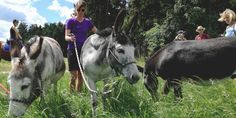 Horses, Animals, Nature Reserve, Donkey, Tours, Forests, Animales, Animaux, Horse