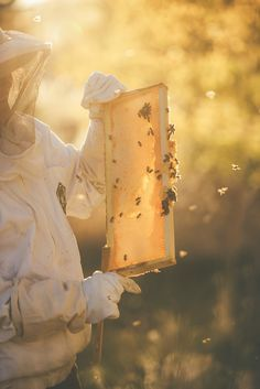 Last night I tasted honey right off the frame -- comb and all! Honey Store, Honey Bee Hives, Honey Bees, Beekeeping For Beginners, Bee Farm, Bee Boxes, Bee Friendly, Birds And The Bees, Bee Happy