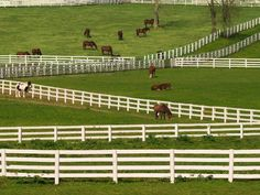 horses on an Amish farm