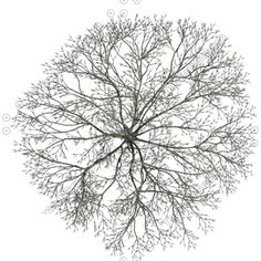 Ideas for tree photoshop png landscapes Tree Plan Photoshop, Photoshop Ideas, Tree Plan Png, Trees Top View, Birch Tree Wallpaper, Tree Pruning, Bare Tree, Tree Photography, Trendy Tree