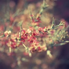 Flower Photography. Original Fine Art Print deal by NatureCloseUp