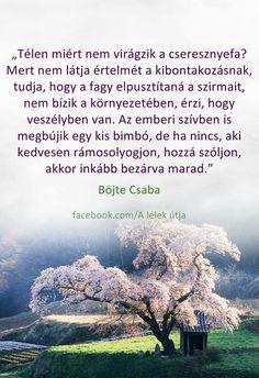 Télen miért nem virágzik a cseresznyefa? Rainbow Dash, Einstein, Motivational Quotes, Life Quotes, Messages, Thoughts, Words, Motivation Quotes, Quotes About Life