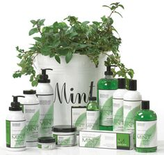 Mint Herb Benefits The best Herbal Remedies for almost everything myherbalmart.com