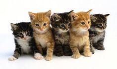 gattini - Cerca con Google