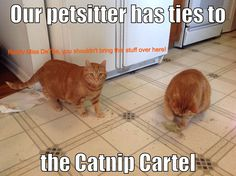 Ginger warns her petsitter of her brother Fred's, catnip addiction.