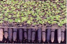 Como preparar mudas. Na hora de fazer a sua horta é importante saber não só como plantar mudas mas também como prepará-las. Você pode sempre optar por comprar as suas mudas mas também pode faze-las por si mesmo e neste ar...