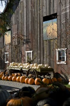 Colorful autumn display of pumpkins and winter squash on pumpkin farm.