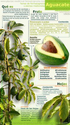 #aguacate #propiedades #usos medicinales. #superalimentos #dieta #nutritivo #salud #saludable #nutricion #alimentacion #infografia