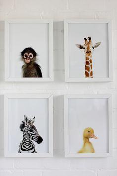 Animal prints - unisex room theme …