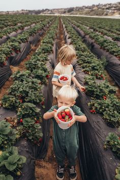 #kids such a cute gathering of kids and berries