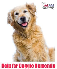 Shiba Inu Dog Rescue a Friend Chrome Metal License Plate Frame Tag Border