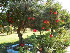 Pomegranate Tree (variety Wonderful) would make a productive planting as a shrub. Uneaten fruit could be given to the chickens. Zones 7-10