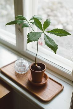 Chestnut tree by Babes in Boyland