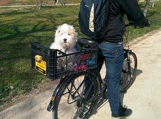 Su primer paseo en bici