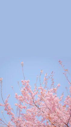 Flower Iphone Wallpaper, Spring Wallpaper, Flower Background Wallpaper, Scenery Wallpaper, Cute Wallpaper Backgrounds, Pretty Wallpapers, Cherry Blossom Wallpaper Iphone, Phone Wallpapers, Hd Wallpaper