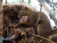 ママ リス & 彼女の赤ちゃん ベクトル