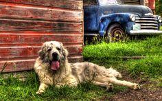 old animals grass dogs trucks HDR photography barn vibrant farm - Wallpaper (#2292390) / Wallbase.cc