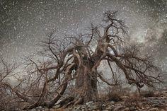 ALLPE Medio Ambiente Blog Medioambiente.org : Viejos árboles a la luz de las estrellas