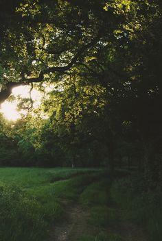 Sunlit tree »» Thomas Hanks