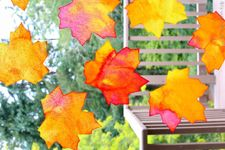 Thanksgiving Crafts for Kids: Fall Leaf Suncatchers: PBS Kids